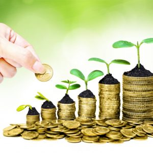 bigstock-trees-growing-on-coins-65289997-1024x683